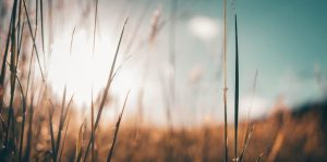Ten Reasons Why Lutherans Care for All Creation