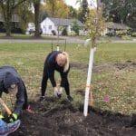 Concordia College in Moorhead Hosts Successful Community Tree Planting Event (2017)