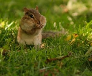 God in Forests: Who is Jesus for Chipmunks?