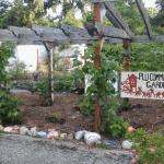 Pacific Lutheran University Community Garden