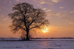 Second Sunday of Advent in Year B (Mundahl20)