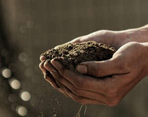 Connections Call: How Church Soil Can Feed the Community
